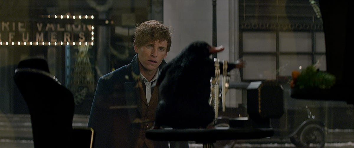 Newt and the Niffler have a 'complicated' relationship.