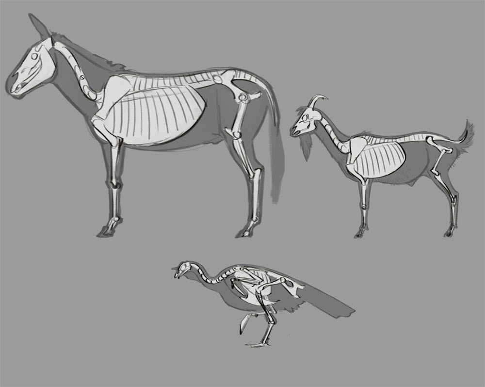 Animal comparison study by Aaron Blaise.