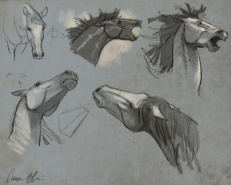 Horse anatomy head studies by Aaron Blaise.