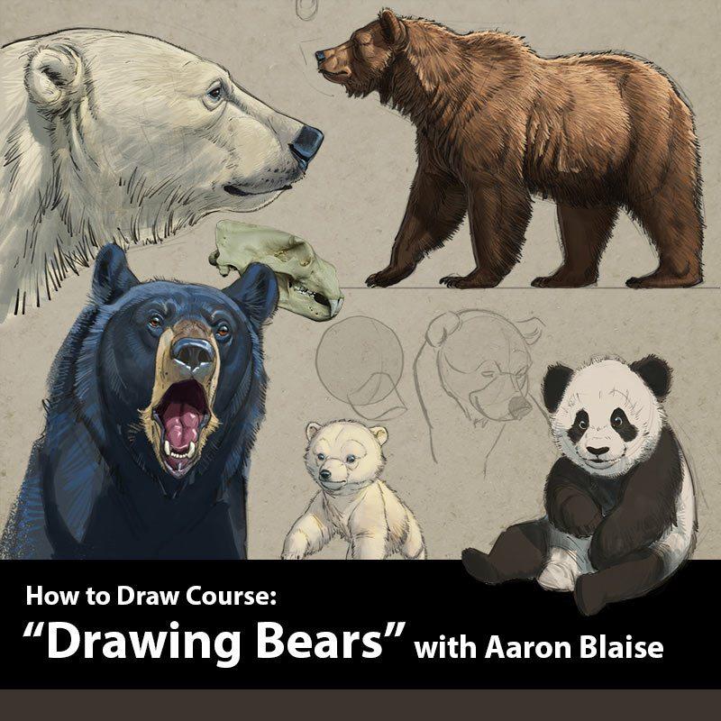 blaise_animals_howto_bears