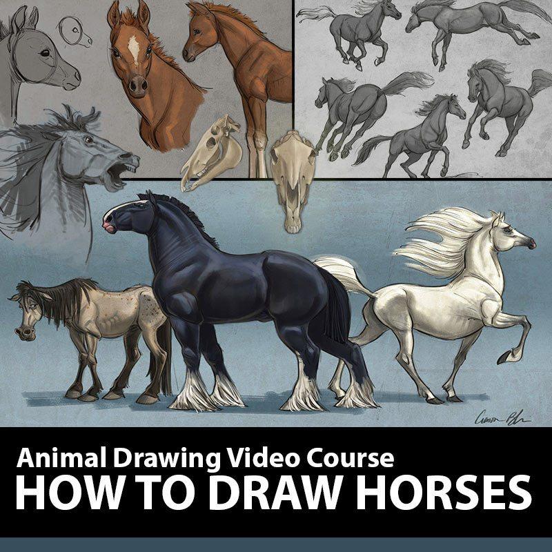 blaise_animals_howto_horses
