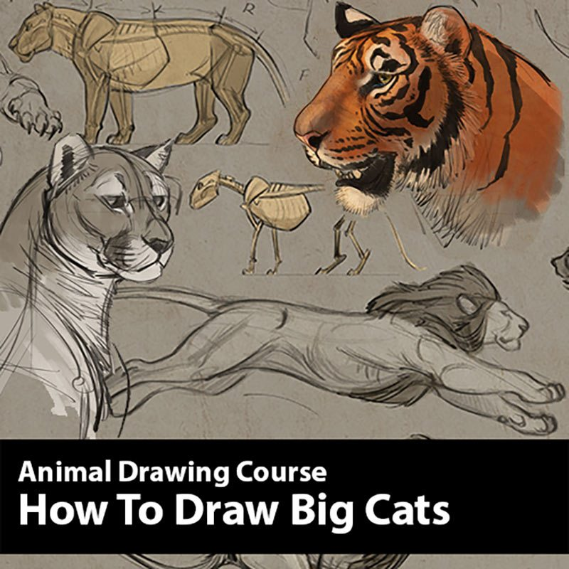blaise_animals_howto_tigers