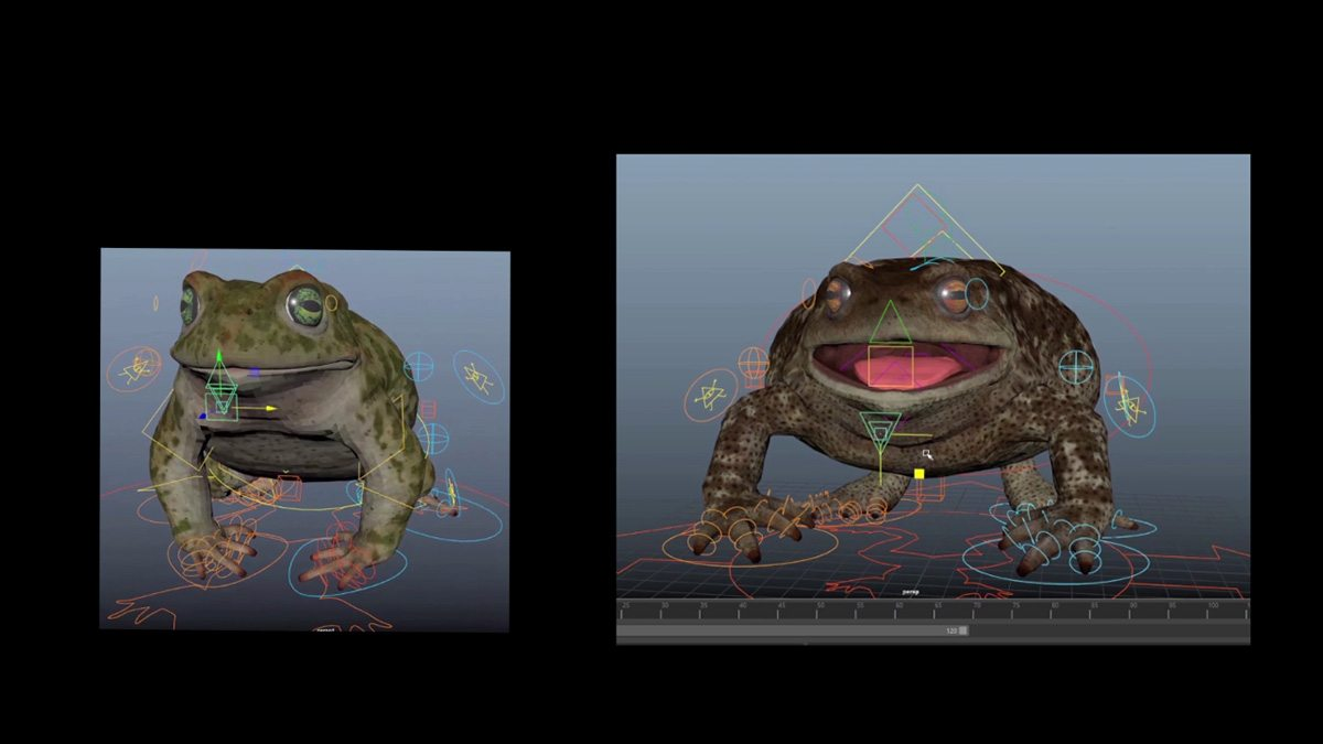Frog model.