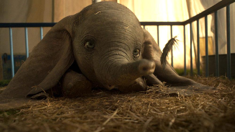 """""""Dumbo."""""""