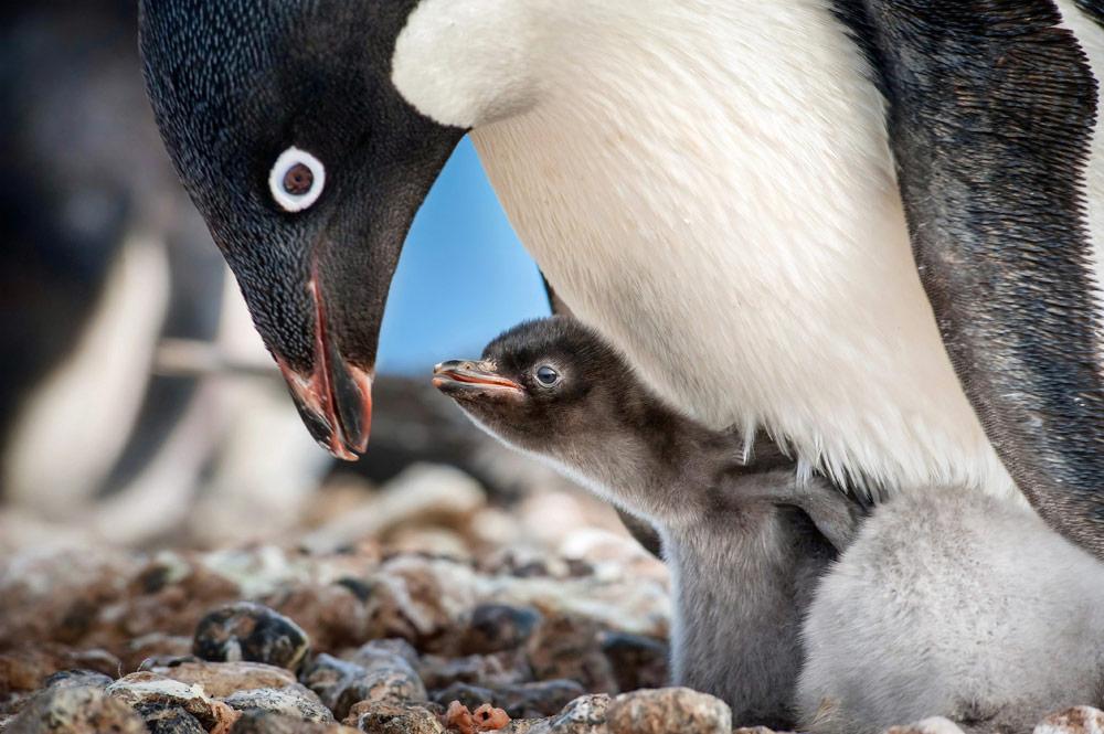 """Penguins."""