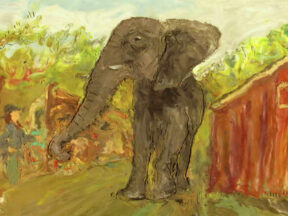 The Elephant's Song