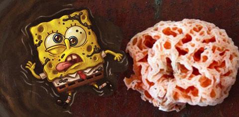 spongebobfungus
